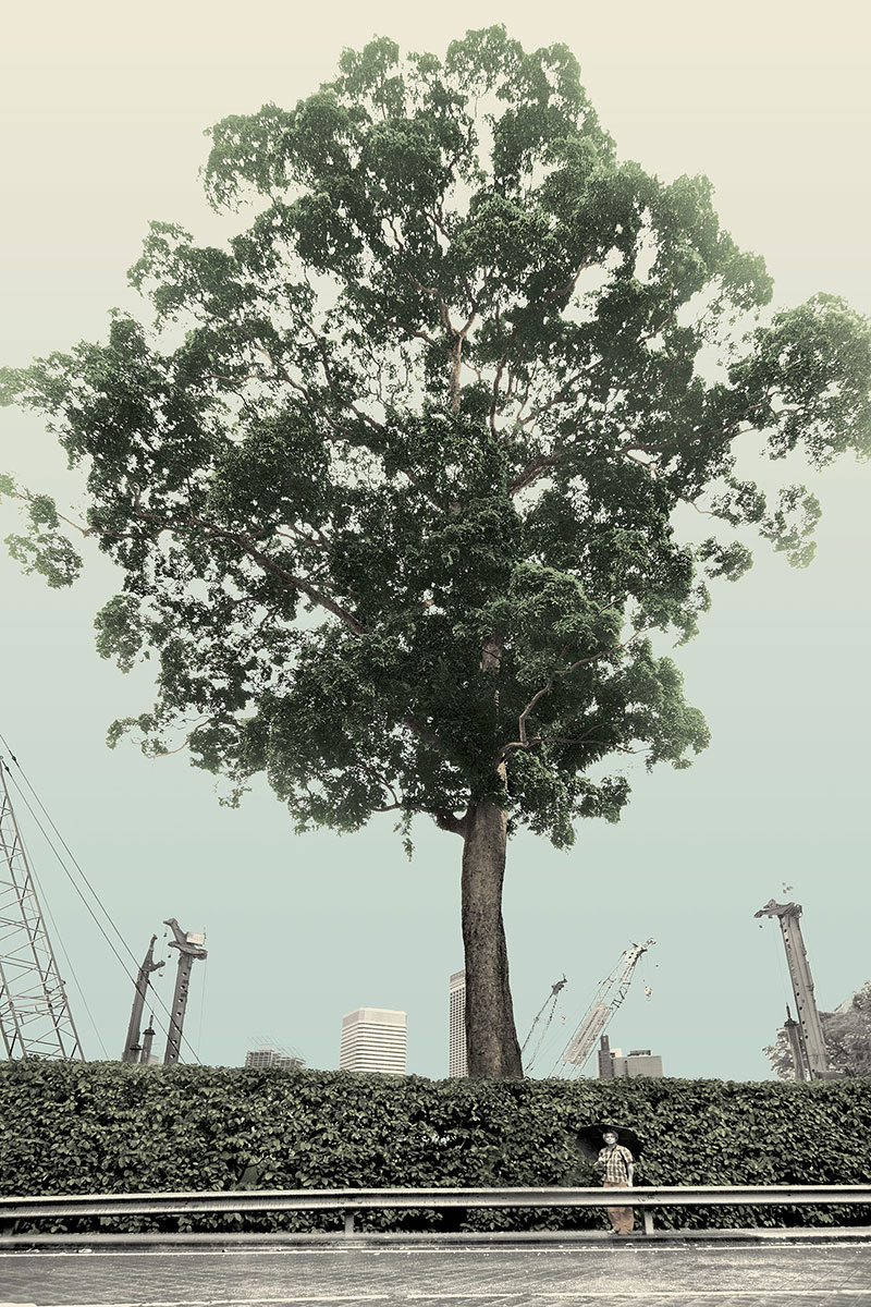 Singapore, Very Old Tree